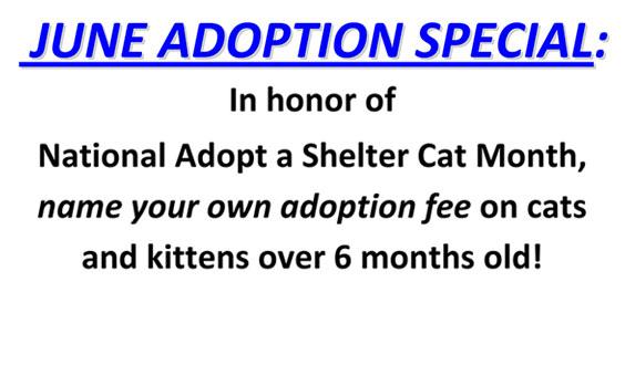 June Cat Adoption Special