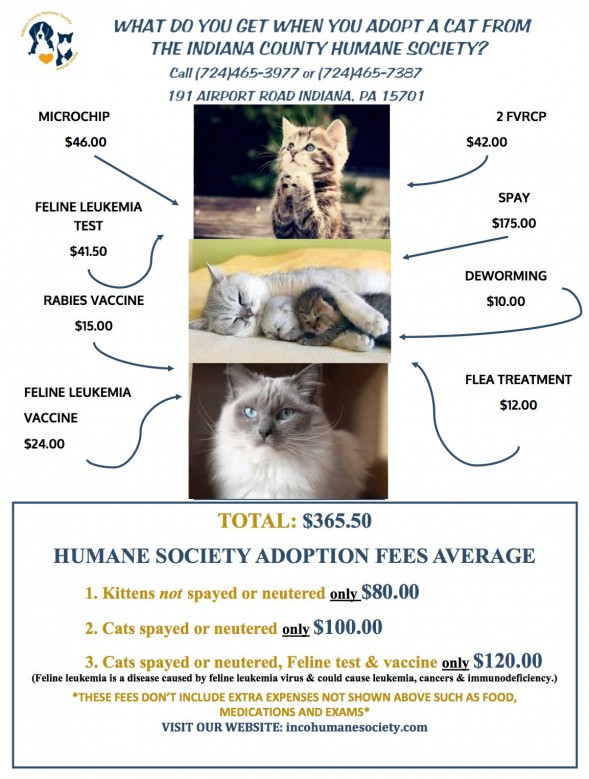HUMANE-SOCIETY-CATS
