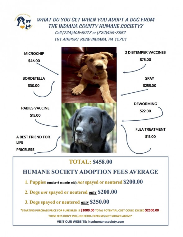 HUMANE SOCIETY DOGS
