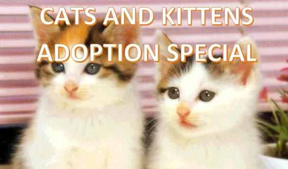 Cats and Kittens Adoptions Special