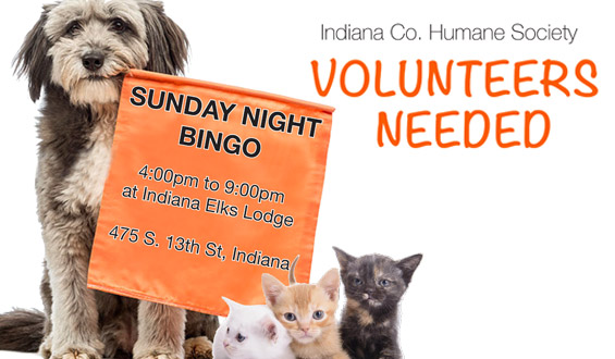 BINGO Volunteers Needed