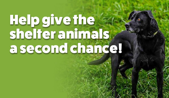 Donate today to help give the shelter animals A Second Chance!