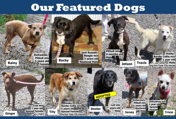 Indiana County Pennsylvania Humane Society